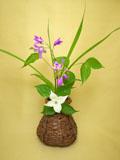 煤竹 花籠 シラン ヤマボウシ